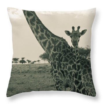 Young Giraffe With Mom In Sepia Throw Pillow by Darcy Michaelchuk
