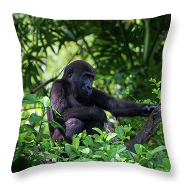Throw Pillow featuring the photograph Young Gorilla by Arthur Dodd