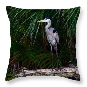 Young Great Blue Heron Throw Pillow