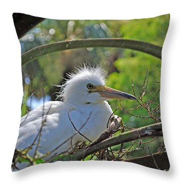 Young Great Egret Throw Pillow by Kenneth Albin