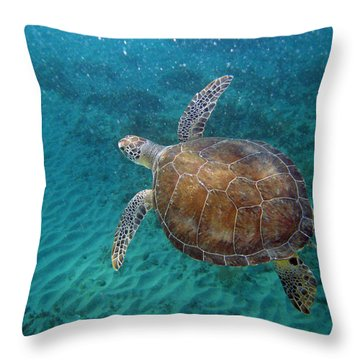 Young Green Turtle Throw Pillow by Kimberly Mohlenhoff