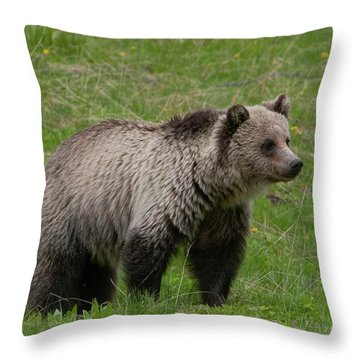 Young Grizzly Throw Pillow