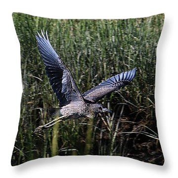 Throw Pillow featuring the photograph Young Heron Takes Flight by William Selander