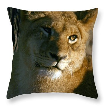 Young Lion Throw Pillow