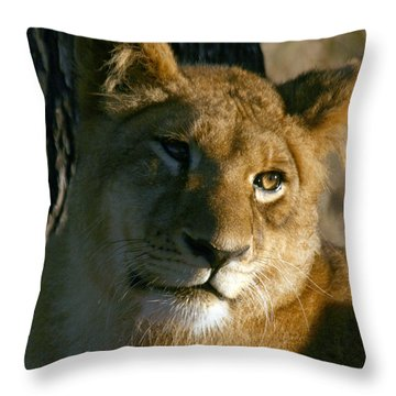 Throw Pillow featuring the photograph Young Lion by Karen Zuk Rosenblatt