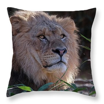 Young Lion King Throw Pillow