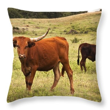 Young Longhorn Throw Pillow by Tamyra Ayles