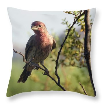Young Male House Finch Throw Pillow