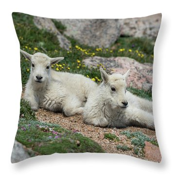 Young Mountain Goats Throw Pillow