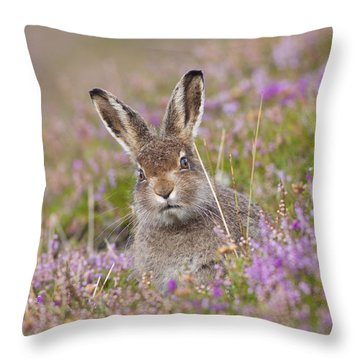 Young Mountain Hare In Purple Heather Throw Pillow