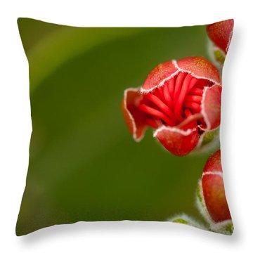 Young Ohia Lehua Blossom Throw Pillow by Kenton Wandasan