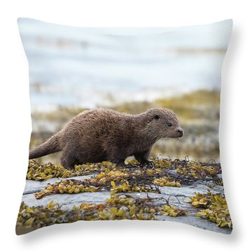 Young Otter Throw Pillow