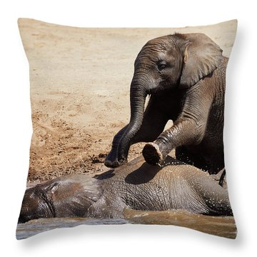 Throw Pillow featuring the photograph Young Playful African Elephants by Nick Biemans