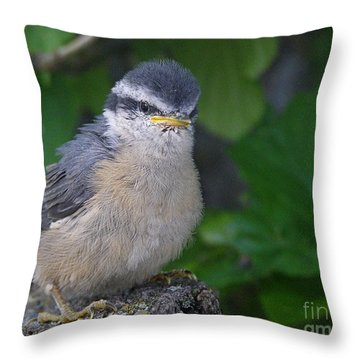 Throw Pillow featuring the photograph Young Red-breasted Nuthatch No. 1 by Angie Rea