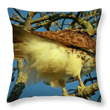 Young Red-tail Throw Pillow by Phill Doherty