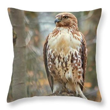 Young Red Tailed Hawk  Throw Pillow