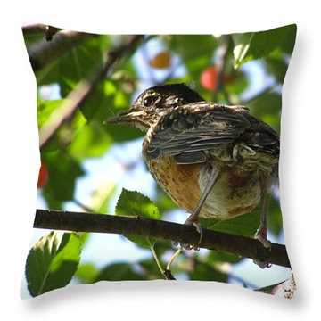 Throw Pillow featuring the photograph Young Robin by Angie Rea