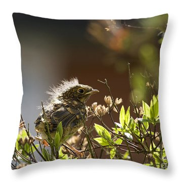 Young Robin Throw Pillow by Jane Rix