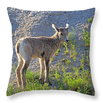 Young Rocky Mountain Bighorn Sheep Throw Pillow by Louise Heusinkveld