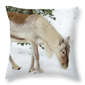 Throw Pillow featuring the photograph Young Rudolf by Delphimages Photo Creations