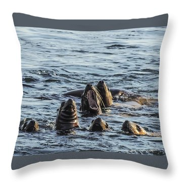 Young Sea Lions At Play Throw Pillow
