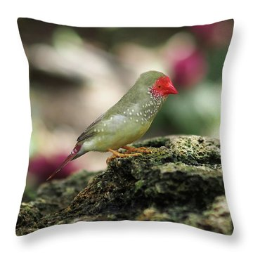 Young Star Finch Throw Pillow