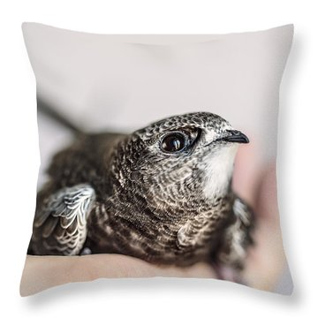 Young Swift Throw Pillow