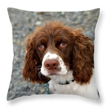 Young Water Spaniel Throw Pillow