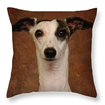 Young Whippet Throw Pillow by Greg Mimbs