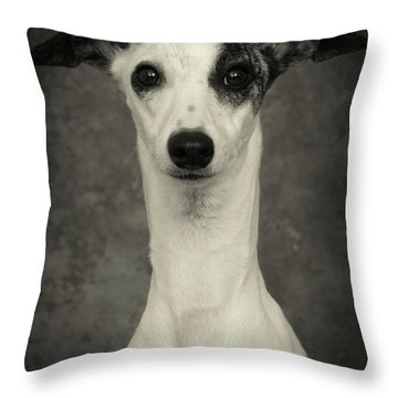 Throw Pillow featuring the photograph Young Whippet In Black And White by Greg and Chrystal Mimbs