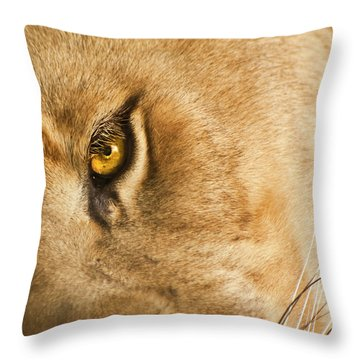Your Lion Eye Throw Pillow by Carolyn Marshall