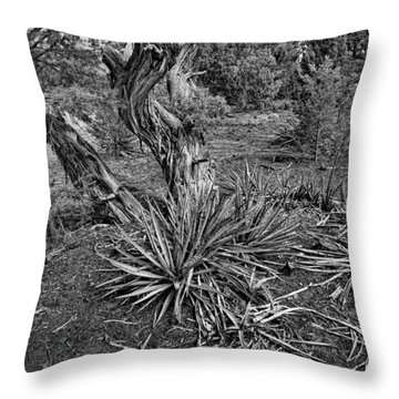 Yucca In Juniper Forest Throw Pillow