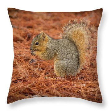Yum Yum Nuts Wildlife Photography By Kaylyn Franks     Throw Pillow