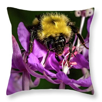 Throw Pillow featuring the photograph Yummy Pollen by Darcy Michaelchuk