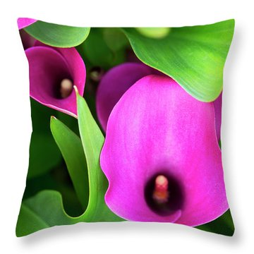 Zantedeschia Santa Fe Throw Pillow