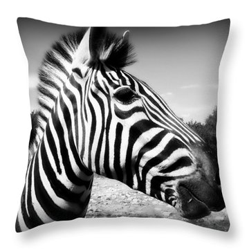 Zebra 2 Throw Pillow by Perry Webster