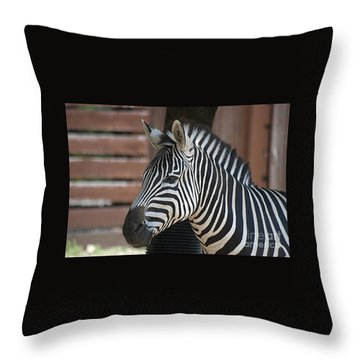 Zebra 20120718_150a Throw Pillow by Tina Hopkins