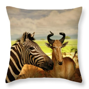 Zebra And Antelope Throw Pillow by Marilyn Hunt