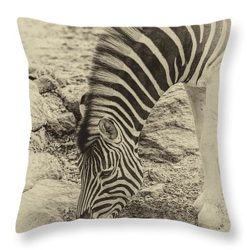 Zebra Ap Throw Pillow