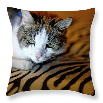 Zebra Cat Throw Pillow