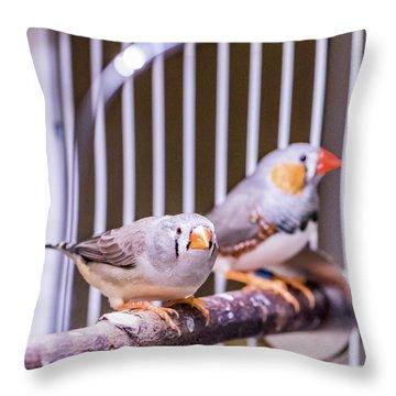 Zebra Finch Pair Throw Pillow