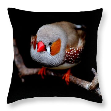 Zebra Finch Throw Pillow