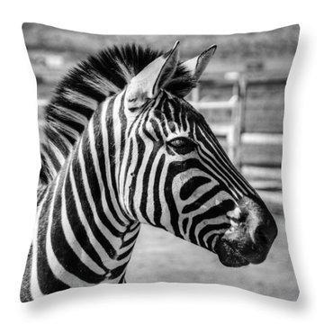 Zebra Throw Pillow by Geraldine Alexander