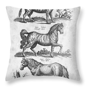 Zebra Historiae Naturalis 1657 Throw Pillow