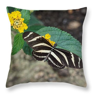 Throw Pillow featuring the photograph Zebra Longwing Butterfly - 1 by Paul Gulliver