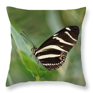Throw Pillow featuring the photograph Zebra Longwing Butterfly - 2 by Paul Gulliver