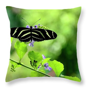 Throw Pillow featuring the photograph Zebra Longwing Butterfly by Corinne Rhode