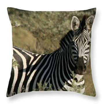 Throw Pillow featuring the photograph Zebra Portrait by Karen Zuk Rosenblatt