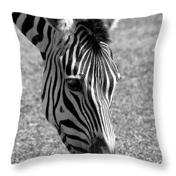 Zebra Portrait Throw Pillow