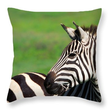 Zebra Throw Pillow by Sebastian Musial